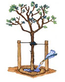 tree-staking