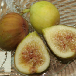 Ficus carica 'Desert King'