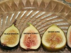 Ficus carica varieties