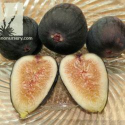 Ficus carica 'Sosa Carillo'